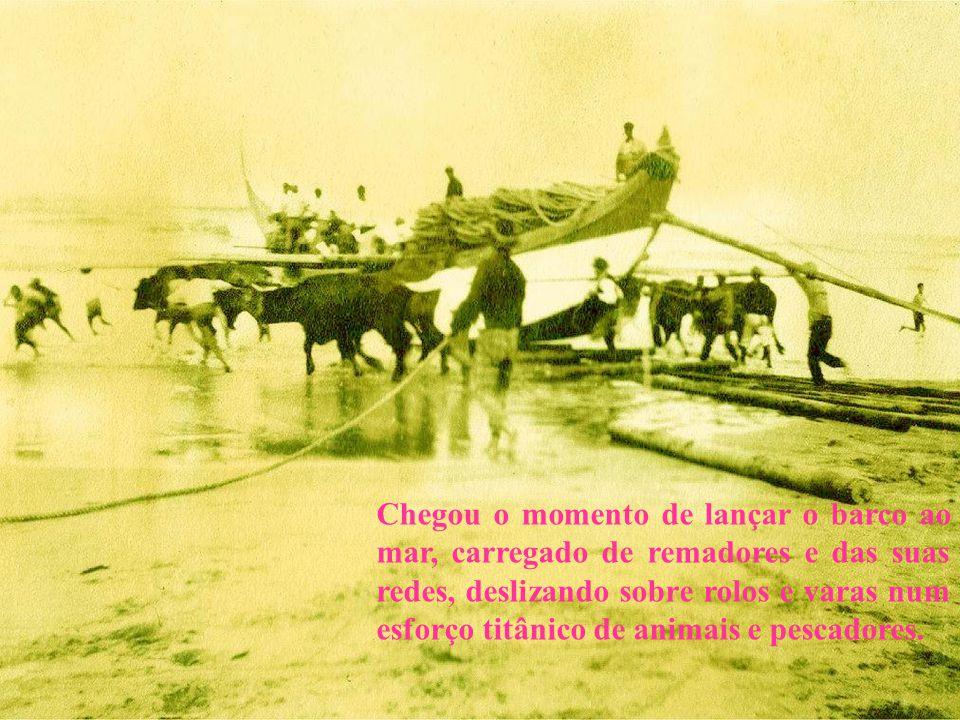 Chegou o momento de lançar o barco ao mar, carregado de remadores e das suas redes, deslizando sobre rolos e varas num esforço titânico de animais e pescadores.