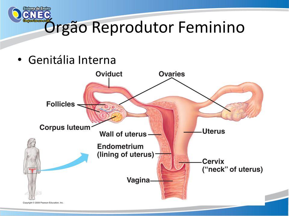 Órgão Reprodutor Feminino • Genitália Interna