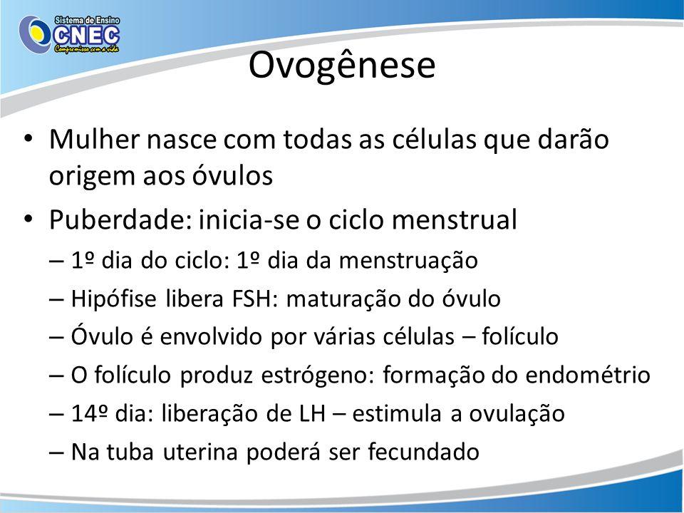 Ovogênese • Mulher nasce com todas as células que darão origem aos óvulos • Puberdade: inicia-se o ciclo menstrual – 1º dia do ciclo: 1º dia da menstruação – Hipófise libera FSH: maturação do óvulo – Óvulo é envolvido por várias células – folículo – O folículo produz estrógeno: formação do endométrio – 14º dia: liberação de LH – estimula a ovulação – Na tuba uterina poderá ser fecundado