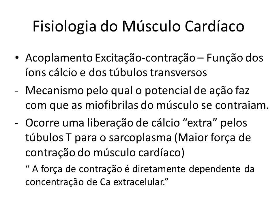 • Acoplamento Excitação-contração – Função dos íons cálcio e dos túbulos transversos -Mecanismo pelo qual o potencial de ação faz com que as miofibril