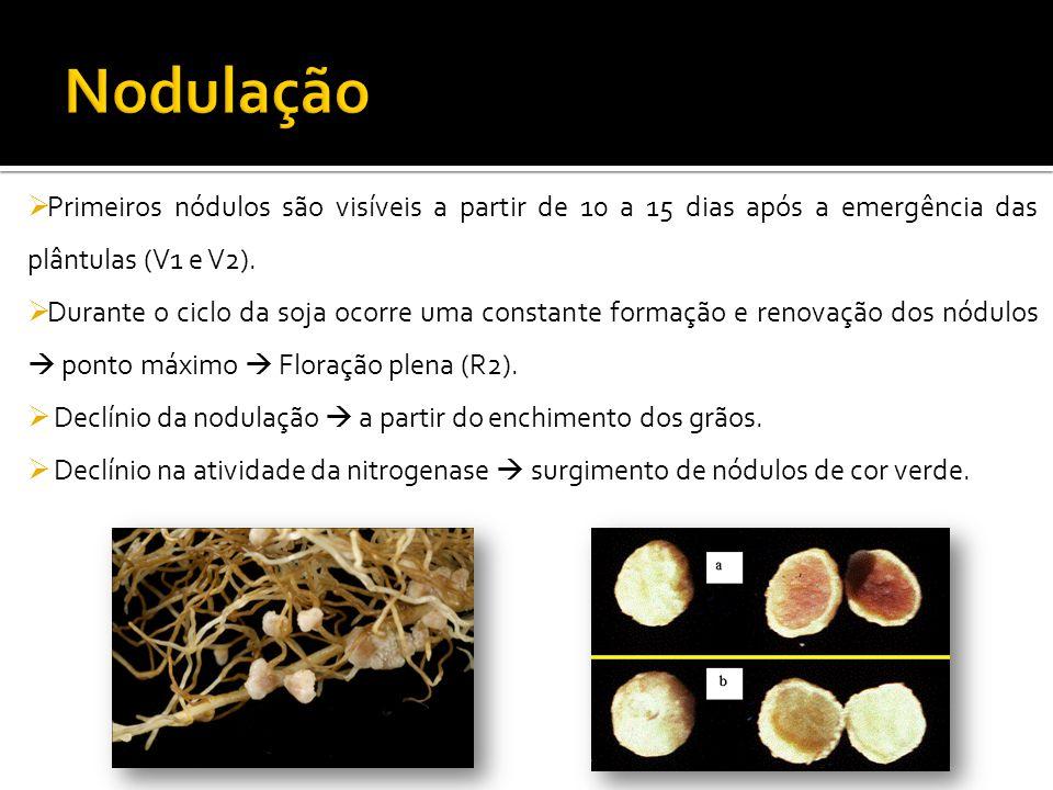  Primeiros nódulos são visíveis a partir de 10 a 15 dias após a emergência das plântulas (V1 e V2).  Durante o ciclo da soja ocorre uma constante fo