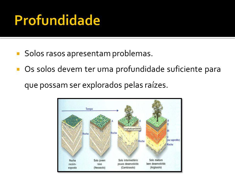  Solos rasos apresentam problemas.  Os solos devem ter uma profundidade suficiente para que possam ser explorados pelas raízes.