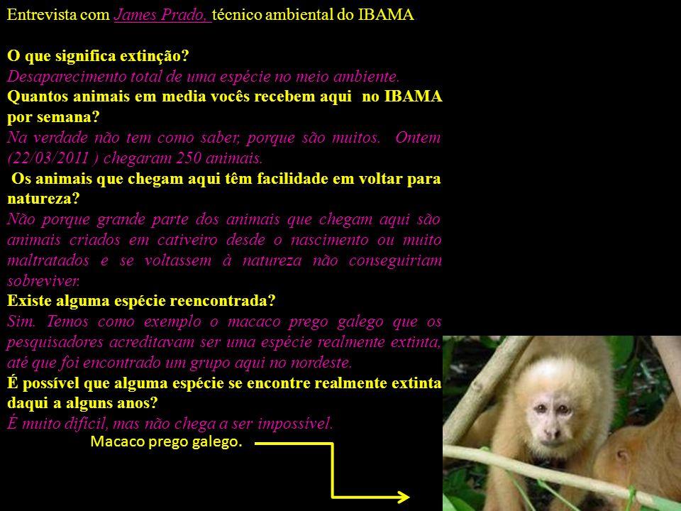 Entrevista com James Prado, técnico ambiental do IBAMA. O que significa extinção? Desaparecimento total de uma espécie no meio ambiente. Quantos anima