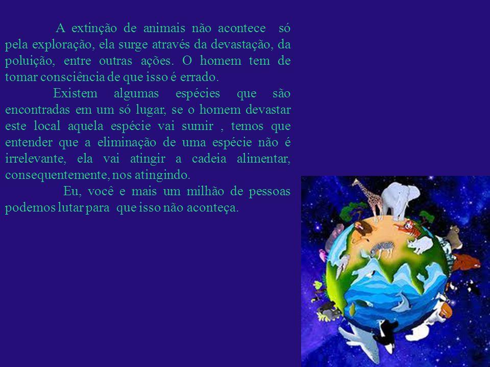 Mariana Lima Luna nº 30 Rayanne Bittencourt nº 37 Apresentação final.