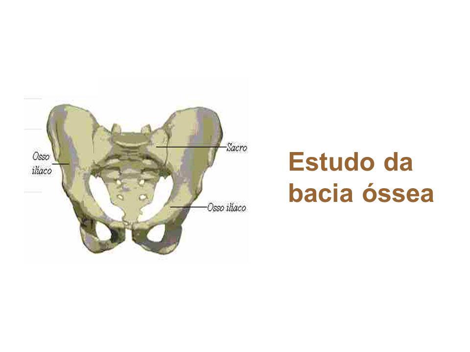 Estudo da bacia óssea