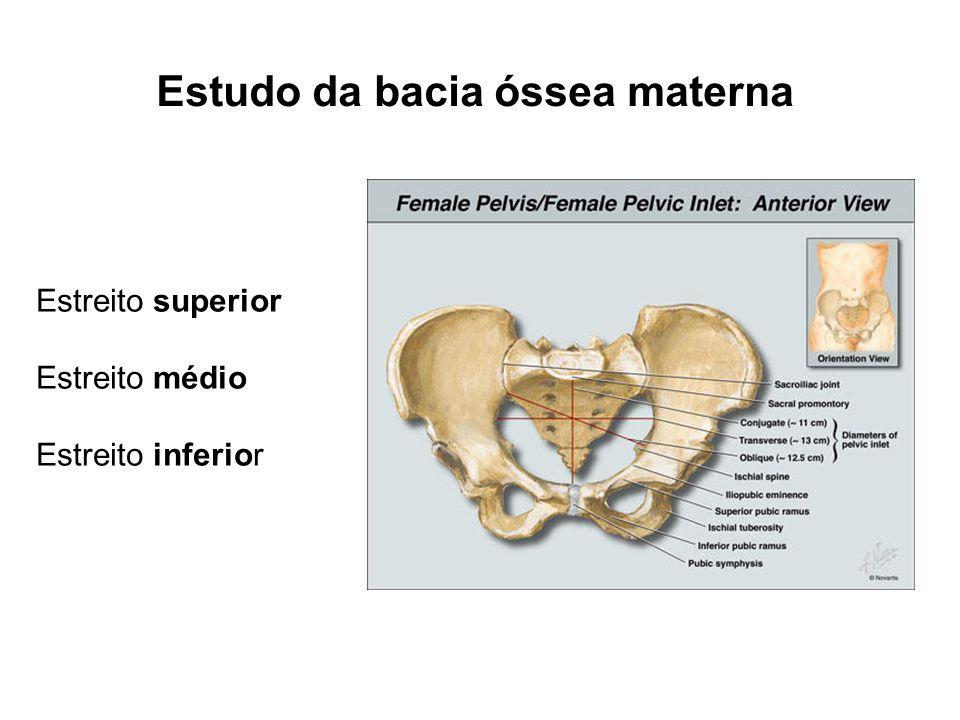Estudo da bacia óssea materna Estreito superior Estreito médio Estreito inferior