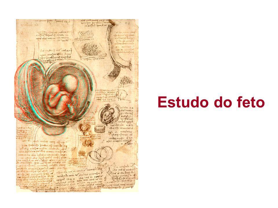 Estudo do feto