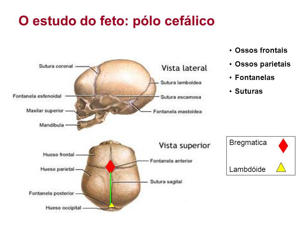 O estudo do feto: pólo cefálico •Ossos frontais •Ossos parietais •Fontanelas •Suturas Bregmatica Lambdóide