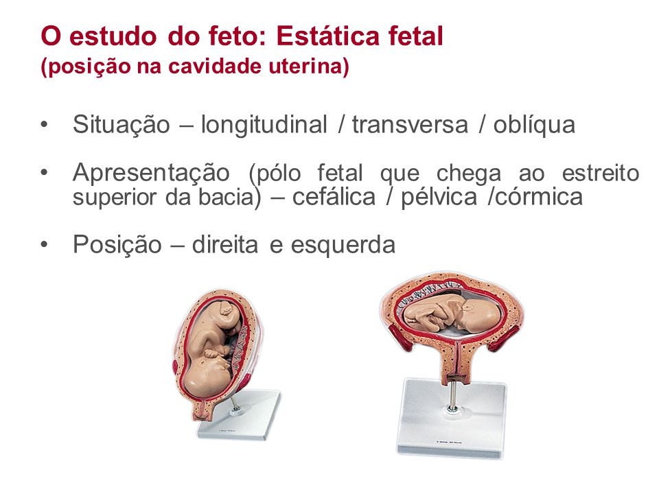 O estudo do feto: Estática fetal (posição na cavidade uterina) •Situação – longitudinal / transversa / oblíqua •Apresentação (pólo fetal que chega ao
