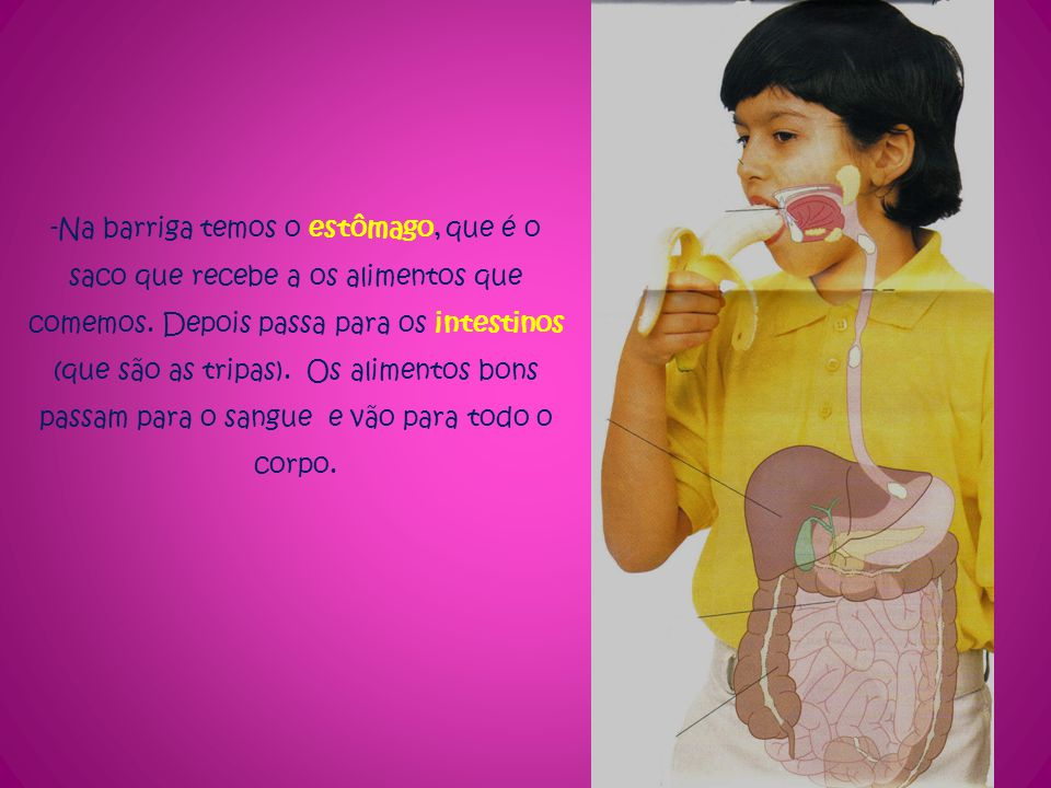 -Na barriga temos o estômago, que é o saco que recebe a os alimentos que comemos. Depois passa para os intestinos (que são as tripas). Os alimentos bo