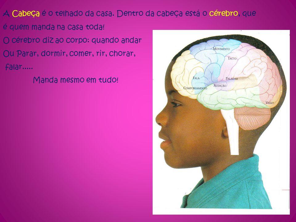 A Cabeça é o telhado da casa. Dentro da cabeça está o cérebro, que é quem manda na casa toda! O cérebro diz ao corpo: quando andar Ou Parar, dormir, c