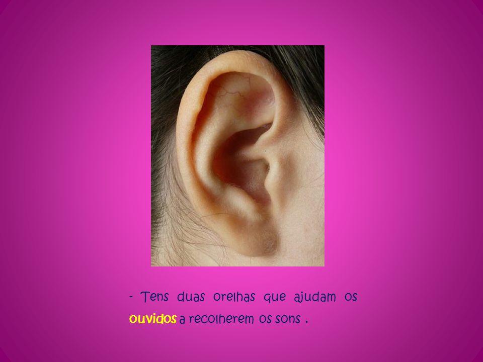 - Tens duas orelhas que ajudam os ouvidos a recolherem os sons.