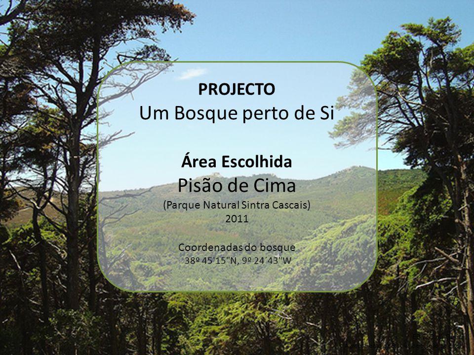 PROJECTO Um Bosque perto de Si Área Escolhida Pisão de Cima (Parque Natural Sintra Cascais) 2011 Coordenadas do bosque 38º 45'15