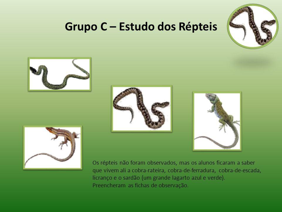 Grupo C – Estudo dos Répteis Os répteis não foram observados, mas os alunos ficaram a saber que vivem ali a cobra-rateira, cobra-de-ferradura, cobra-d