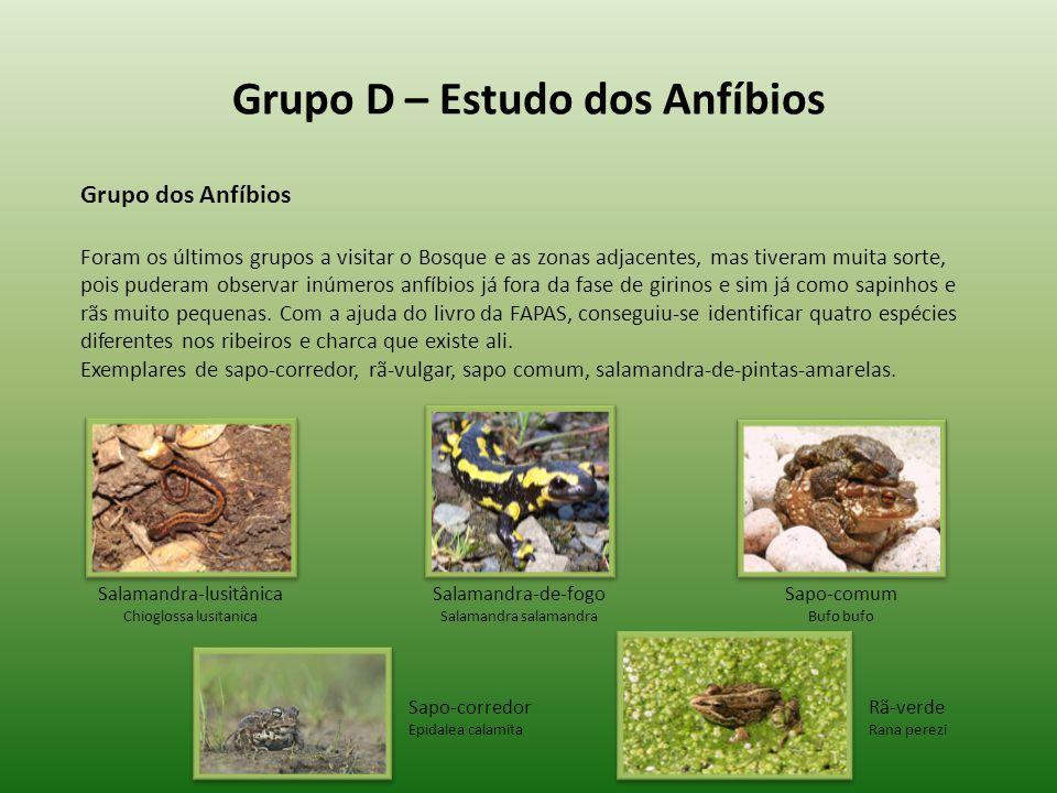 Grupo D – Estudo dos Anfíbios Grupo dos Anfíbios Foram os últimos grupos a visitar o Bosque e as zonas adjacentes, mas tiveram muita sorte, pois puder