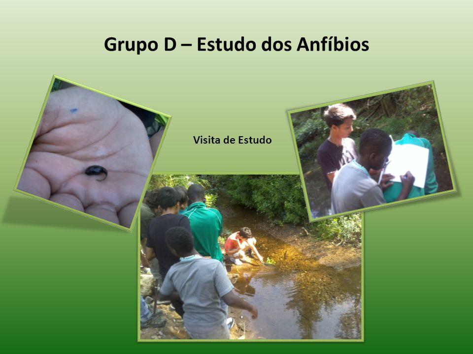 Grupo D – Estudo dos Anfíbios Visita de Estudo