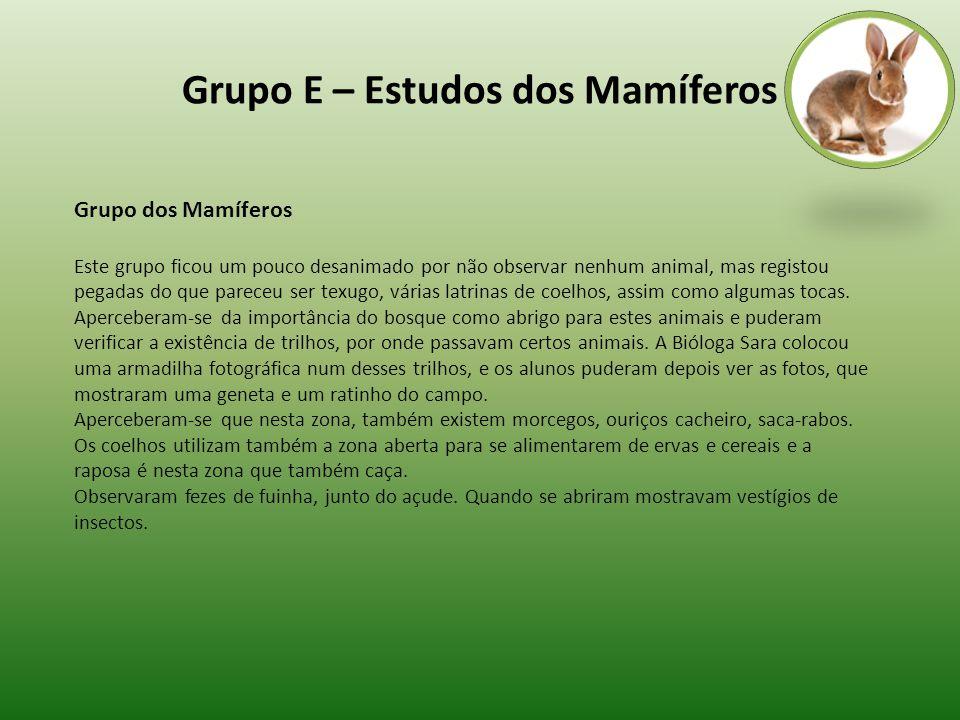 Grupo E – Estudos dos Mamíferos Grupo dos Mamíferos Este grupo ficou um pouco desanimado por não observar nenhum animal, mas registou pegadas do que p