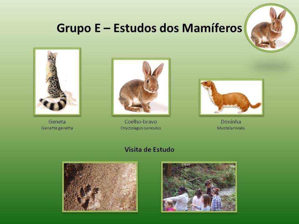 Grupo E – Estudos dos Mamíferos Geneta Genette genetta Doninha Mustela nivalis Coelho-bravo Oryctolagus cuniculus Visita de Estudo