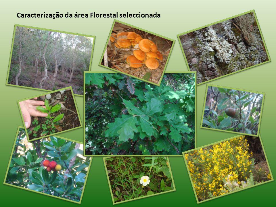 Caracterização da área Florestal seleccionada