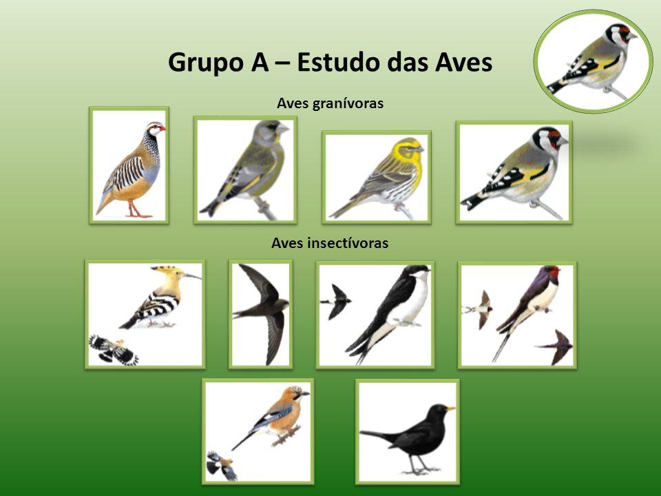 Grupo A – Estudo das Aves Aves insectívoras Aves granívoras