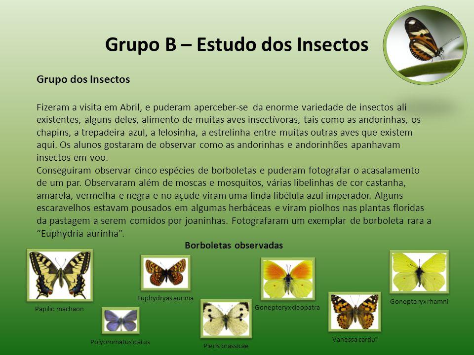 Grupo B – Estudo dos Insectos Grupo dos Insectos Fizeram a visita em Abril, e puderam aperceber-se da enorme variedade de insectos ali existentes, alg