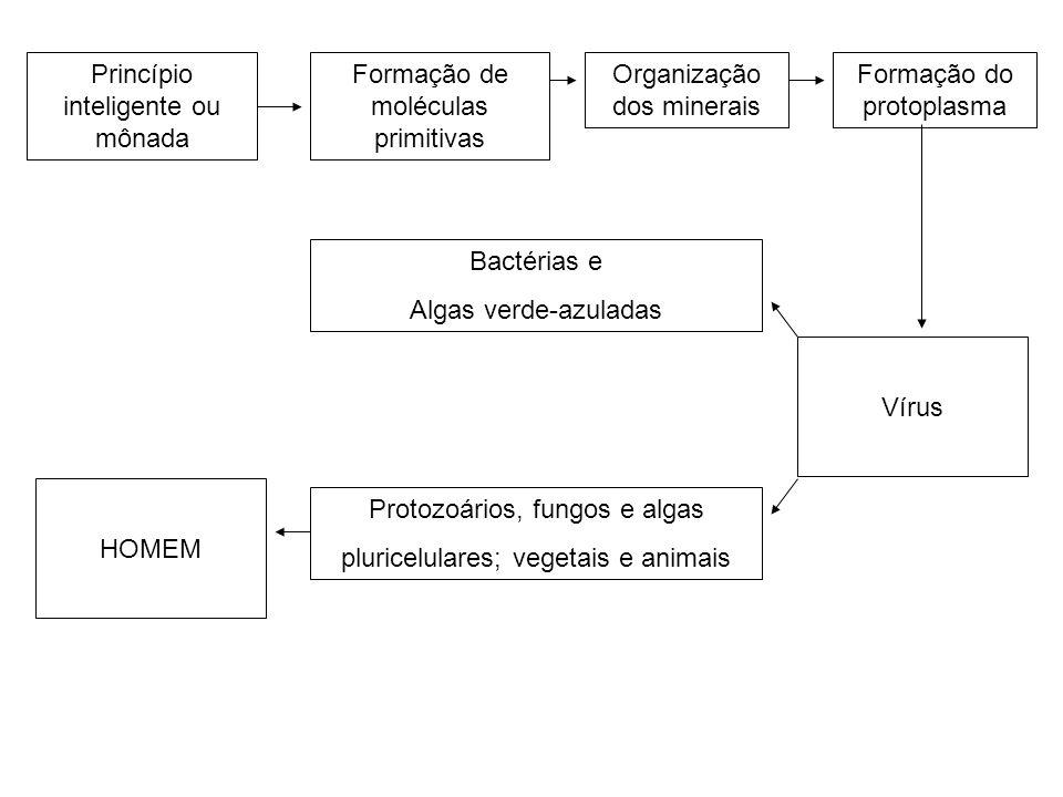 Princípio inteligente ou mônada Formação de moléculas primitivas Organização dos minerais Formação do protoplasma Bactérias e Algas verde-azuladas Pro
