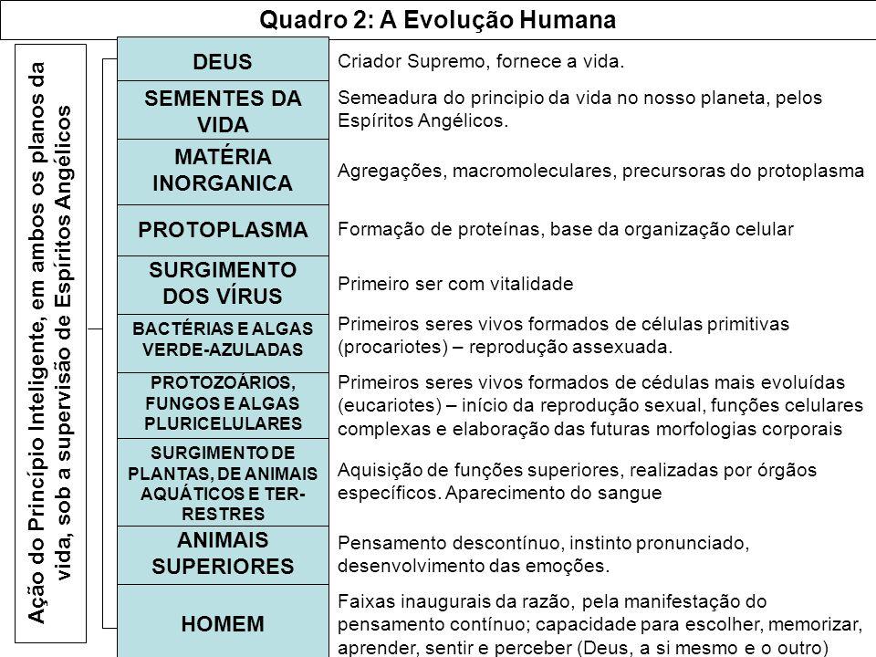 Quadro 2: A Evolução Humana DEUS SEMENTES DA VIDA MATÉRIA INORGANICA PROTOPLASMA SURGIMENTO DOS VÍRUS BACTÉRIAS E ALGAS VERDE-AZULADAS PROTOZOÁRIOS, F