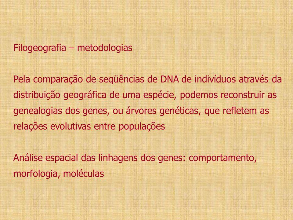Filogeografia – metodologias Pela comparação de seqüências de DNA de indivíduos através da distribuição geográfica de uma espécie, podemos reconstruir as genealogias dos genes, ou árvores genéticas, que refletem as relações evolutivas entre populações Análise espacial das linhagens dos genes: comportamento, morfologia, moléculas