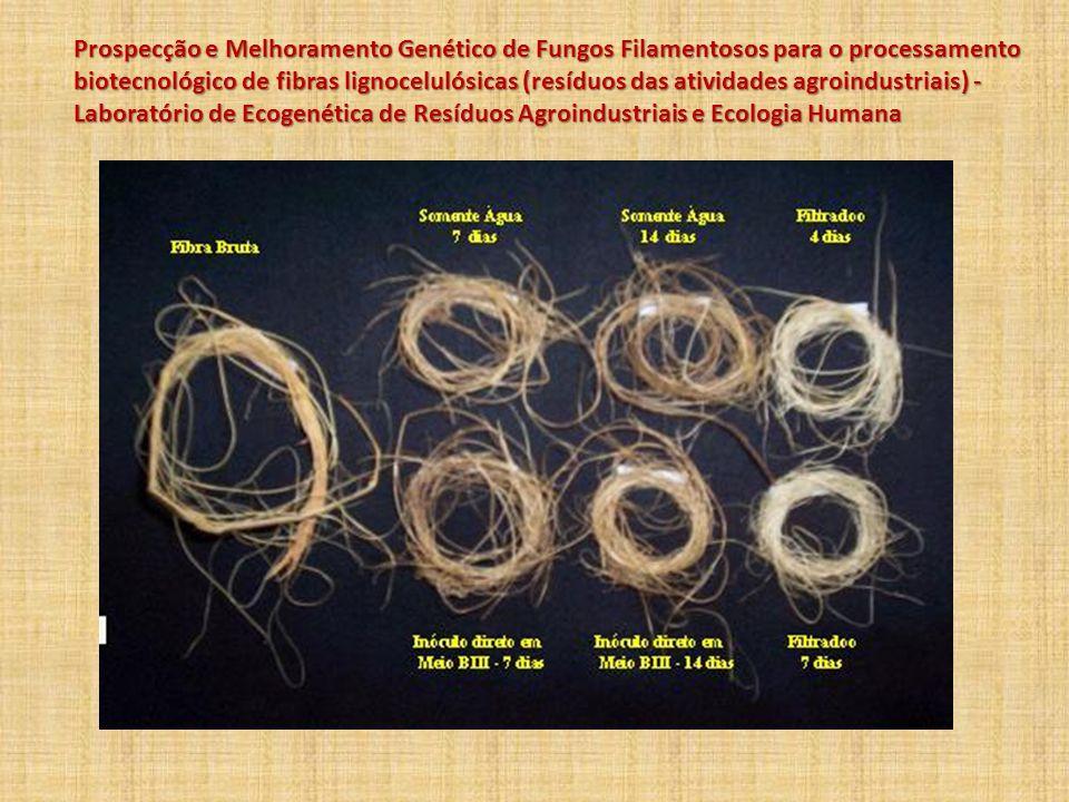 Prospecção e Melhoramento Genético de Fungos Filamentosos para o processamento biotecnológico de fibras lignocelulósicas (resíduos das atividades agro