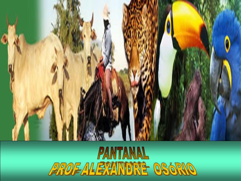 EXERCÍCIOS 4) (UFMS-2003) O Pantanal Mato-Grossense, com uma área de aproximadamente 140.000km 2, localizada na porção central da América do Sul, além de representar o maior complexo de áreas úmidas da região Neotropical, tem, entre seus aspectos notáveis, uma série de condições bastante particulares.