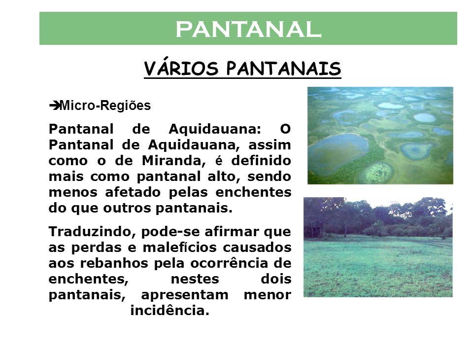 PANTANAL VÁRIOS PANTANAIS  Micro-Regiões Pantanal do Abrobral : é um dos pantanais mais baixos dentre os conhecidos, sendo dos primeiros a encher, ju