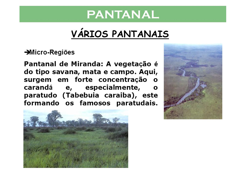 PANTANAL VÁRIOS PANTANAIS  Micro-Regiões Pantanal de Aquidauana: O Pantanal de Aquidauana, assim como o de Miranda, é definido mais como pantanal alt