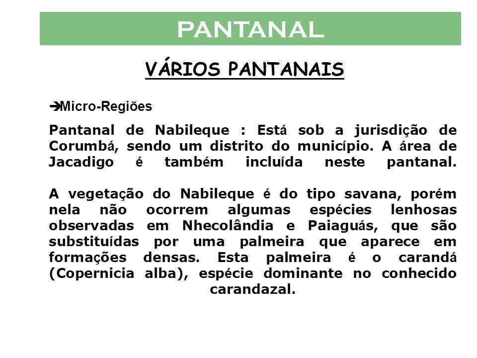 PANTANAL VÁRIOS PANTANAIS  Micro-Regiões Pantanal de Miranda: A vegeta ç ão é do tipo savana, mata e campo. Aqui, surgem em forte concentra ç ão o ca