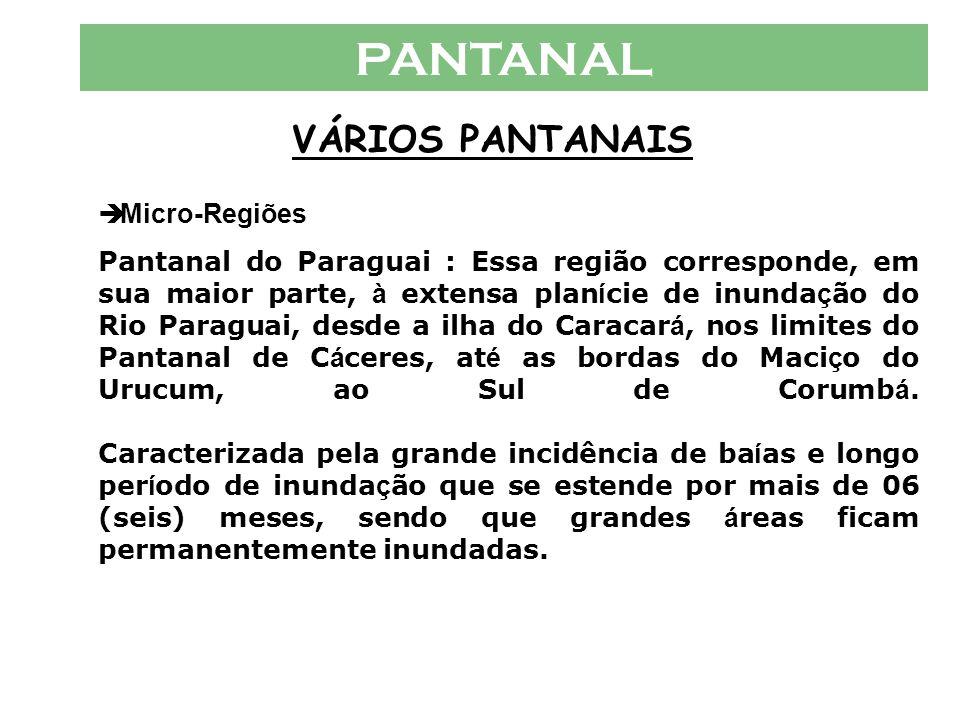 PANTANAL VÁRIOS PANTANAIS  Micro-Regiões Pantanal de Nabileque : Est á sob a jurisdi ç ão de Corumb á, sendo um distrito do munic í pio. A á rea de J