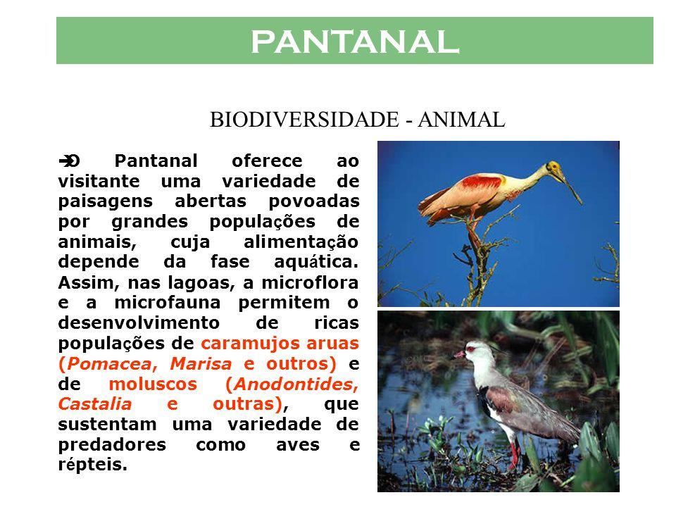 PANTANAL  Numa região um pouco mais elevada, j á com á reas não inund á veis, h á uma vegeta ç ão caracter í stica de cerrado. H á ainda no Pantanal