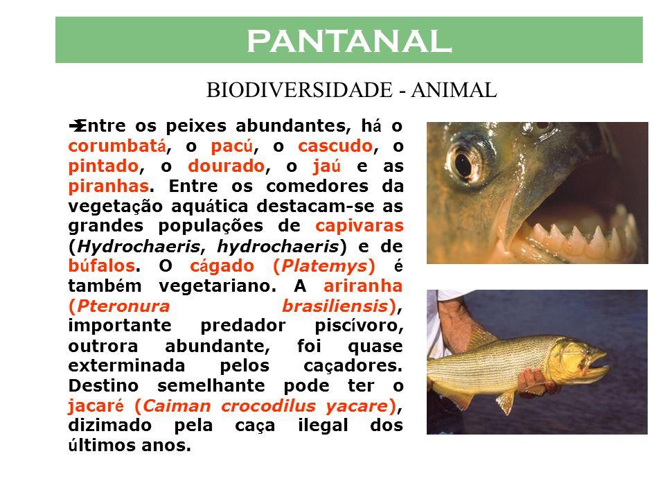 PANTANAL  O Pantanal oferece ao visitante uma variedade de paisagens abertas povoadas por grandes popula ç ões de animais, cuja alimenta ç ão depende