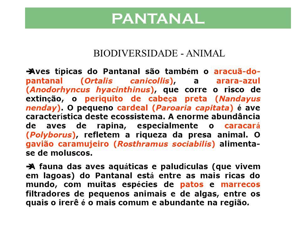 PANTANAL  As aves do Pantanal são um de seus maiores atrativos. Reunidas em enormes concentra ç ões, exploram os recursos alimentares aqu á ticos. O