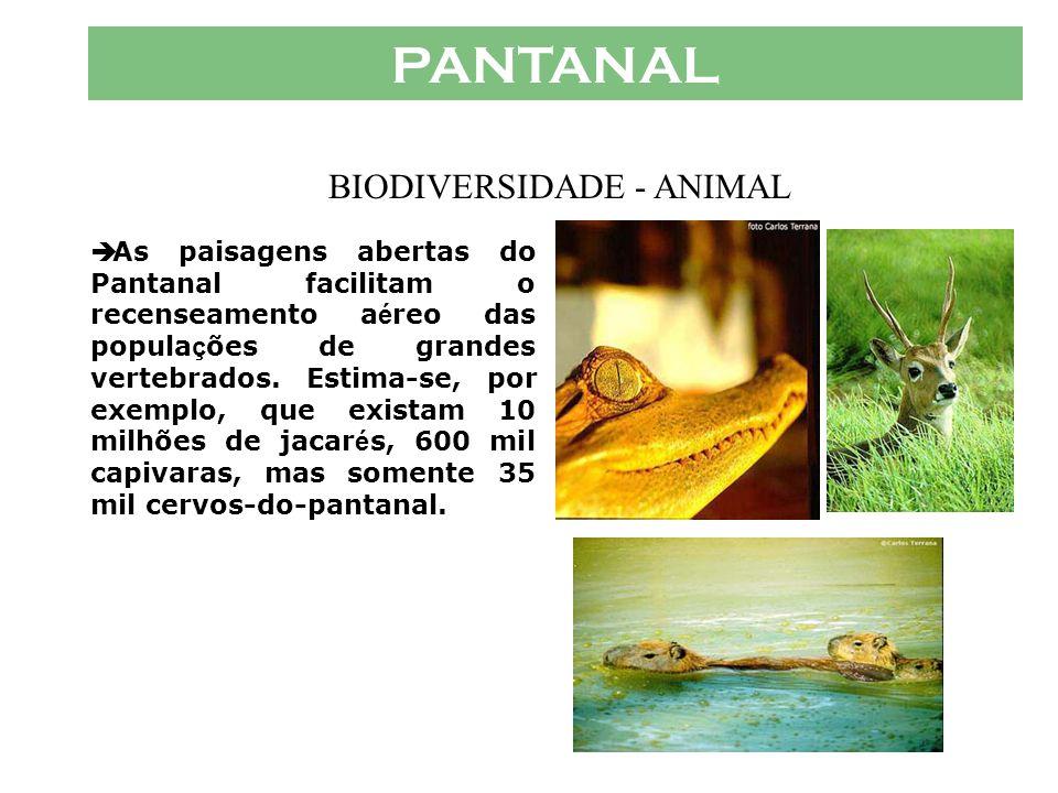 PANTANAL  Animais típicos do cerrado também se concentram em grande número no Pantanal, atraídos pela fartura de alimentos das áreas alagadas. São es