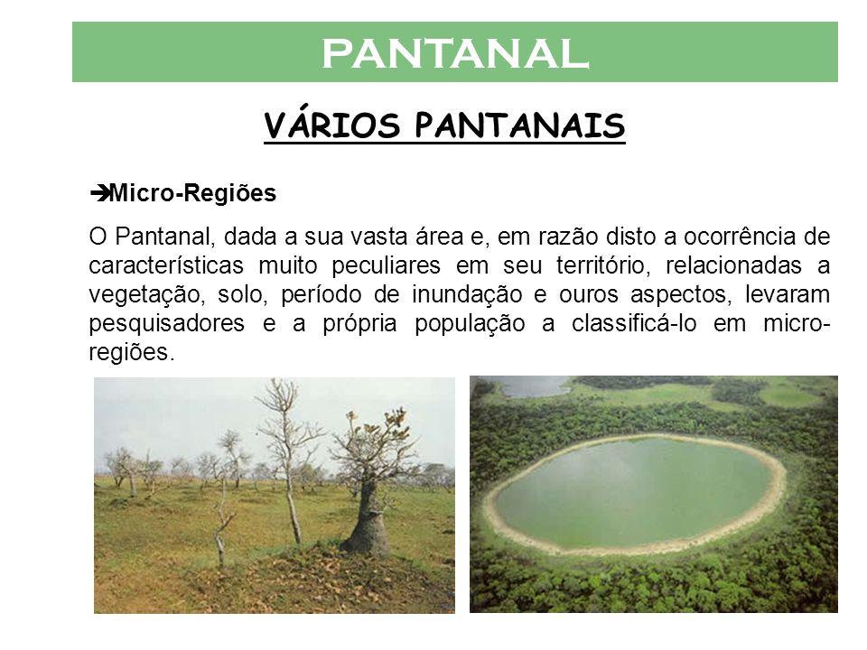 PANTANAL VÁRIOS PANTANAIS  Micro-Regiões O Pantanal, dada a sua vasta área e, em razão disto a ocorrência de características muito peculiares em seu território, relacionadas a vegetação, solo, período de inundação e ouros aspectos, levaram pesquisadores e a própria população a classificá-lo em micro- regiões.