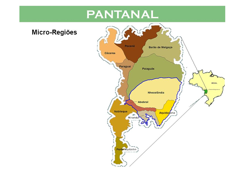 PANTANAL VÁRIOS PANTANAIS  Micro-Regiões O Pantanal, dada a sua vasta área e, em razão disto a ocorrência de características muito peculiares em seu