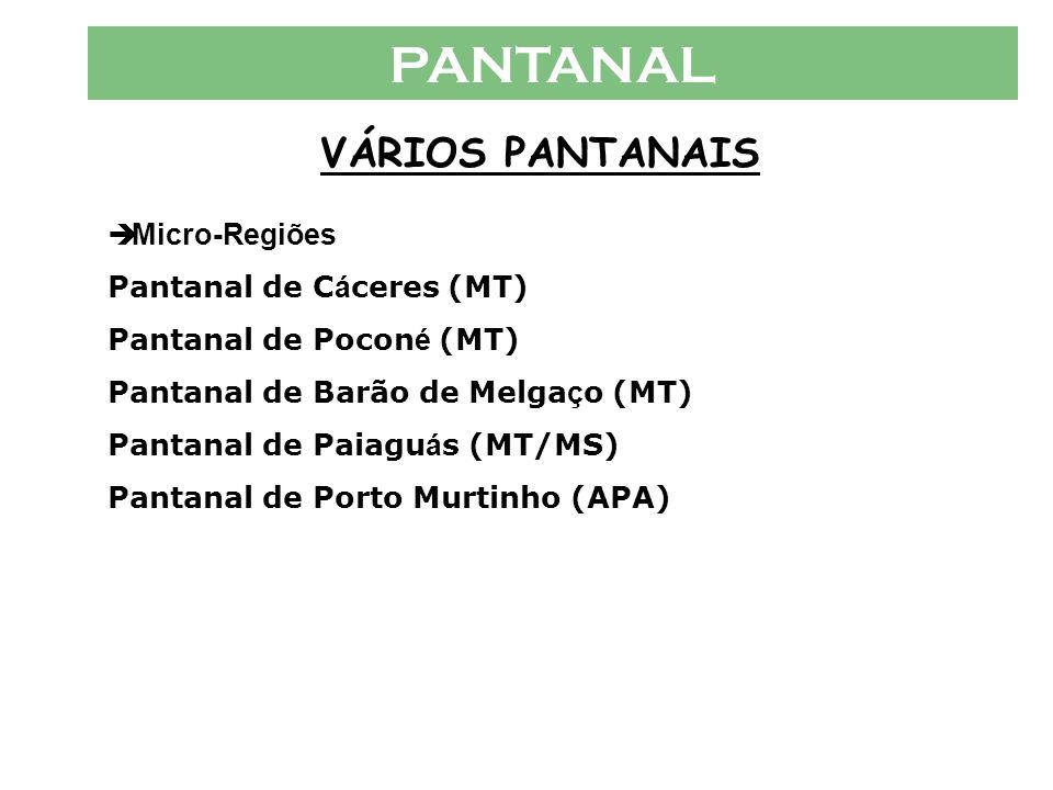 PANTANAL VÁRIOS PANTANAIS  Micro-Regiões Pantanal de C á ceres (MT) Pantanal de Pocon é (MT) Pantanal de Barão de Melga ç o (MT) Pantanal de Paiagu á s (MT/MS) Pantanal de Porto Murtinho (APA)