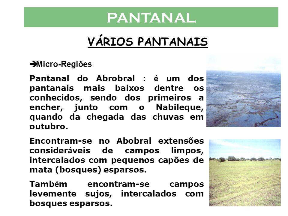 PANTANAL VÁRIOS PANTANAIS  Micro-Regiões Pantanal do Abrobral : é um dos pantanais mais baixos dentre os conhecidos, sendo dos primeiros a encher, junto com o Nabileque, quando da chegada das chuvas em outubro.