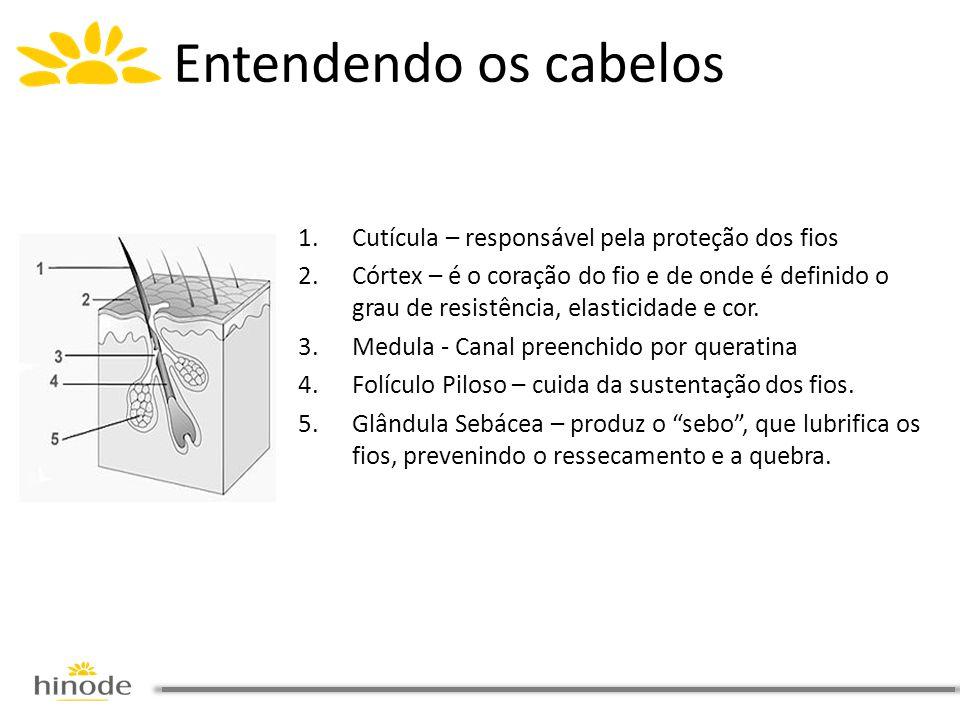 1.Cutícula – responsável pela proteção dos fios 2.Córtex – é o coração do fio e de onde é definido o grau de resistência, elasticidade e cor. 3.Medula