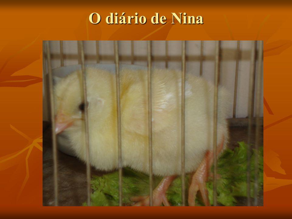 O diário de Nina