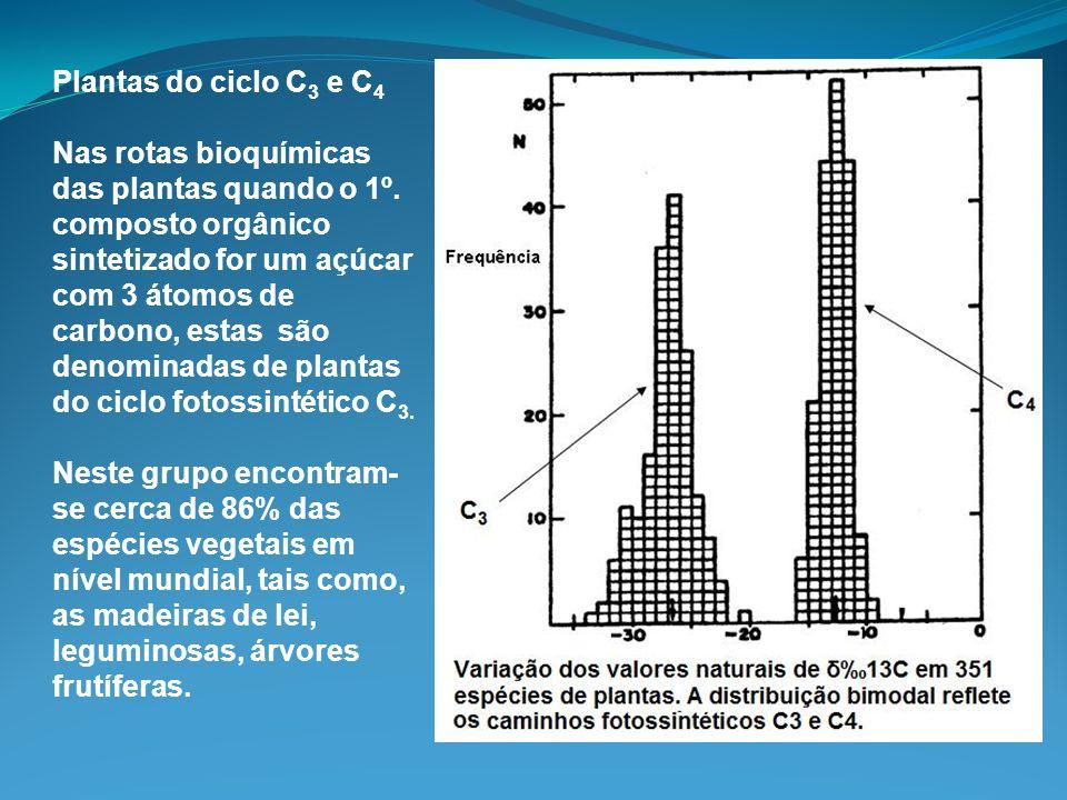 Plantas do ciclo C 3 e C 4 Nas rotas bioquímicas das plantas quando o 1º. composto orgânico sintetizado for um açúcar com 3 átomos de carbono, estas s