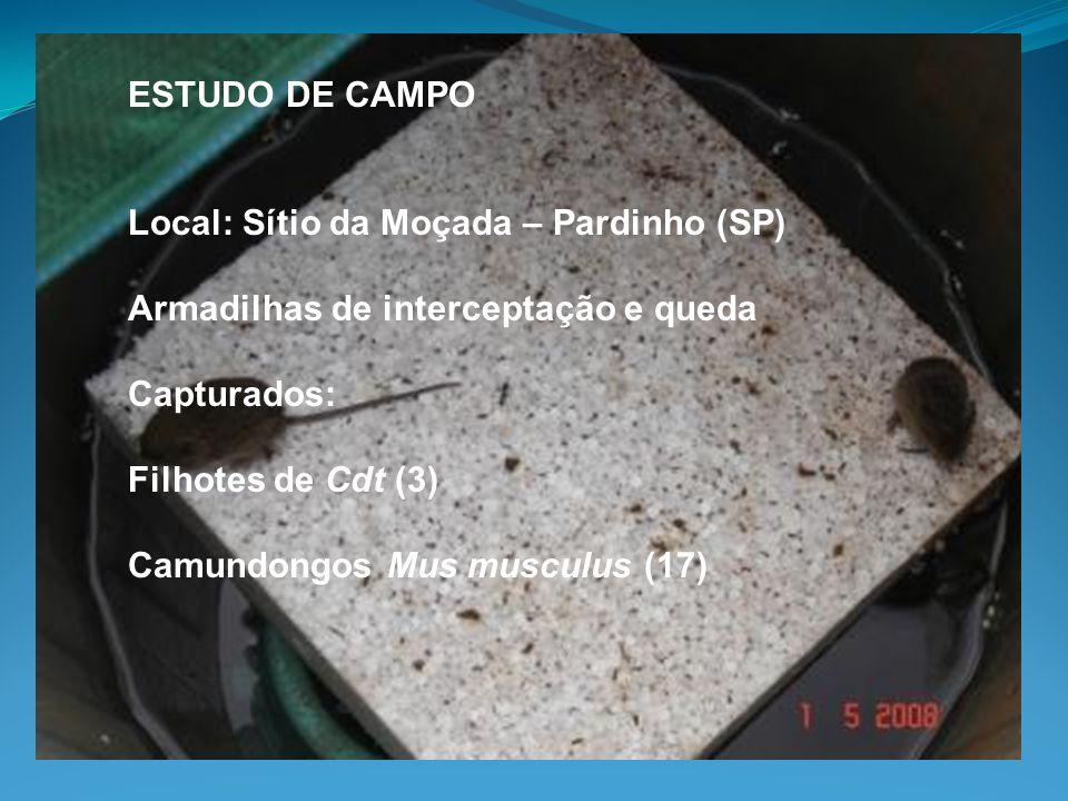 ESTUDO DE CAMPO Local: Sítio da Moçada – Pardinho (SP) Armadilhas de interceptação e queda Capturados: Filhotes de Cdt (3) Camundongos Mus musculus (1
