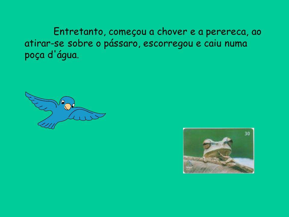 Entretanto, começou a chover e a perereca, ao atirar-se sobre o pássaro, escorregou e caiu numa poça d'água.
