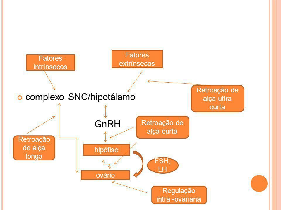 complexo SNC/hipotálamo GnRH Fatores intrínsecos Fatores extrínsecos hipófise ovário FSH, LH Retroação de alça ultra curta Retroação de alça longa Reg