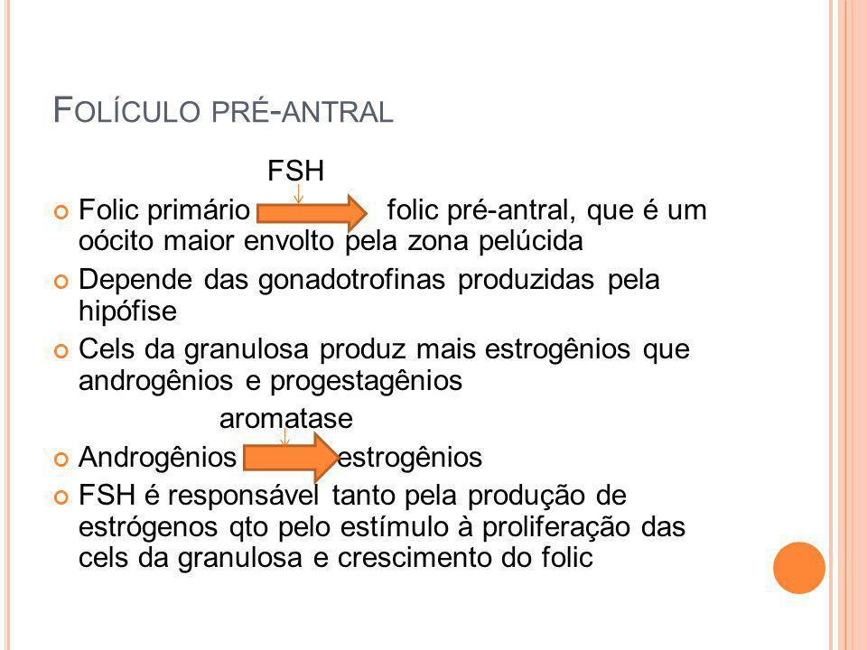 F OLÍCULO PRÉ - ANTRAL FSH Folic primário folic pré-antral, que é um oócito maior envolto pela zona pelúcida Depende das gonadotrofinas produzidas pel
