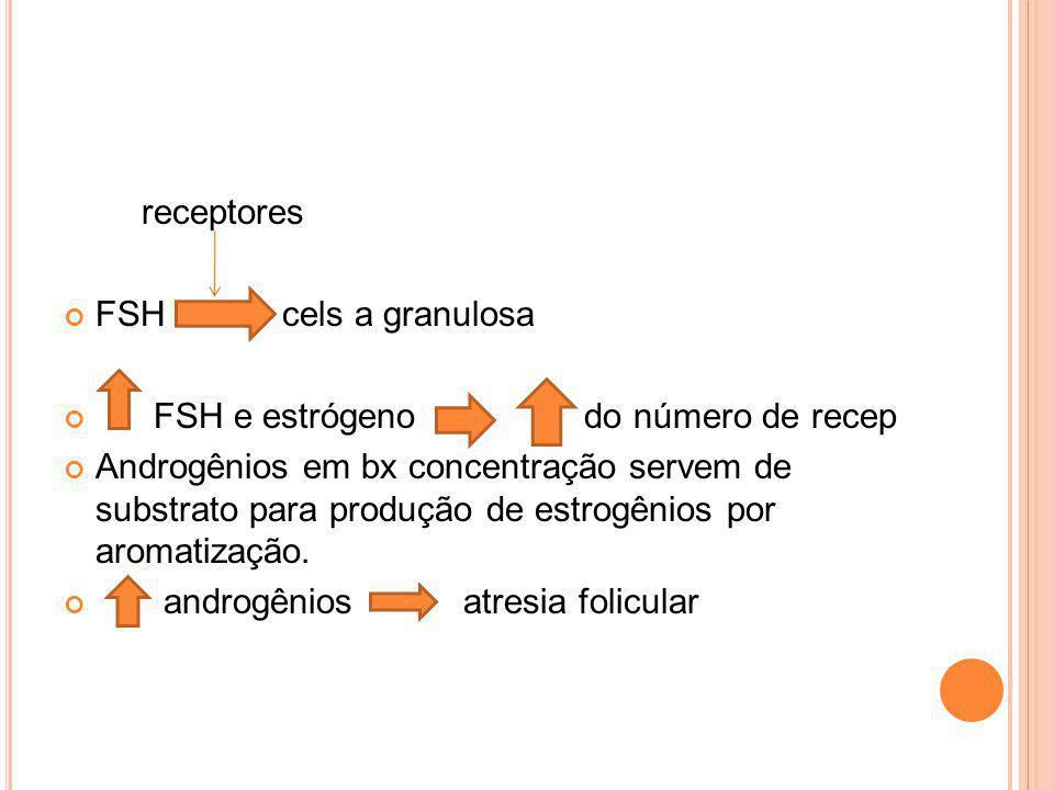 receptores FSH cels a granulosa FSH e estrógeno do número de recep Androgênios em bx concentração servem de substrato para produção de estrogênios por